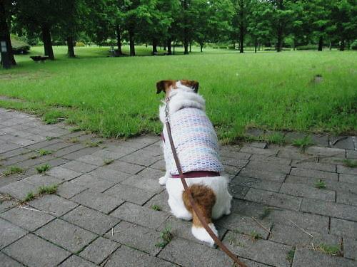 2011長岡公園465