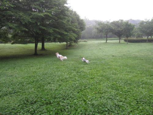 2011長岡公園479