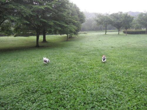 2011長岡公園481