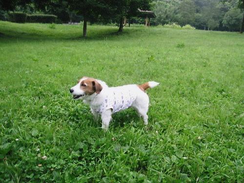 2011長岡公園506