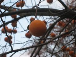 勝尾寺の木