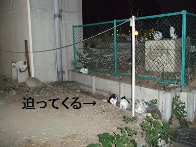 猫大群増量