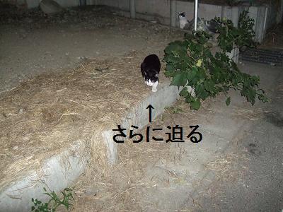 猫、亀田(笑)
