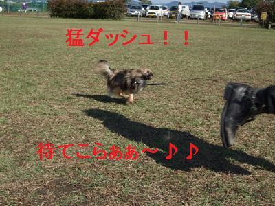 彼氏と走る