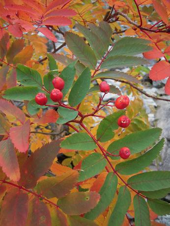 秋の色 001