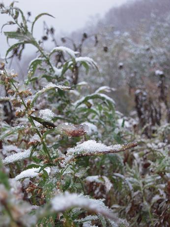 冬の始まり 008