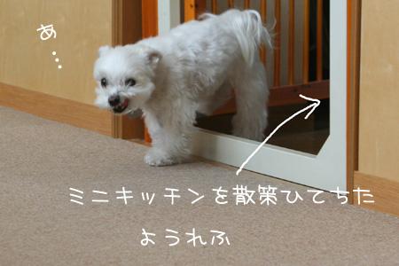 3_6_2592.jpg
