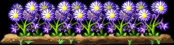 8100009 紫光薬草畑
