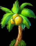 8412007 立派な椰子の木