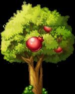 8412005 大きなザクロの木