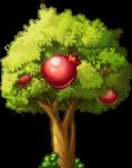 8412004 立派なザクロの木