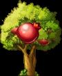 8412003 小さなザクロの木