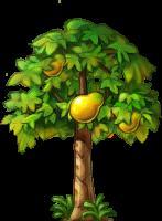 8412011 大きなパパイアの木