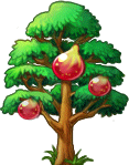 8412013 立派なイチジクの木