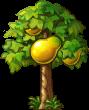 8412009 小さなパパイアの木