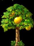 8412010 立派なパパイアの木