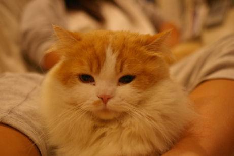 IMGP5132ー猫