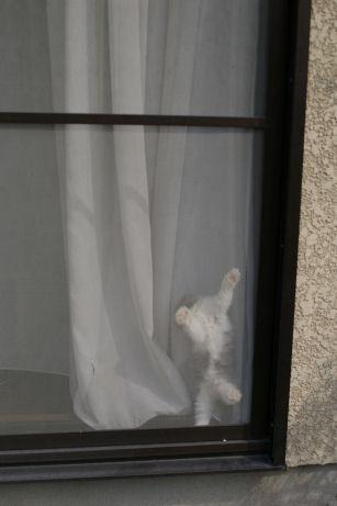 IMGP5233ー猫