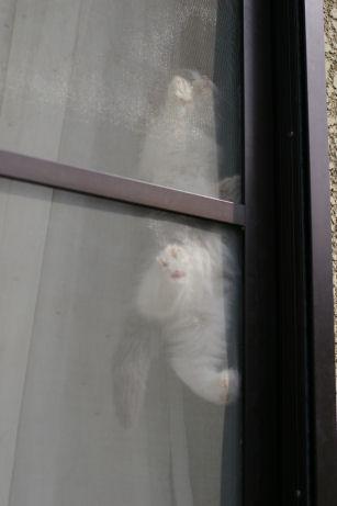 IMGP5227ー猫