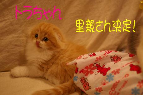 IMGP5184ー猫