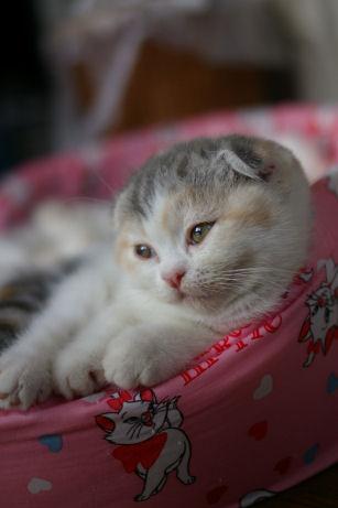 IMGP5404-猫