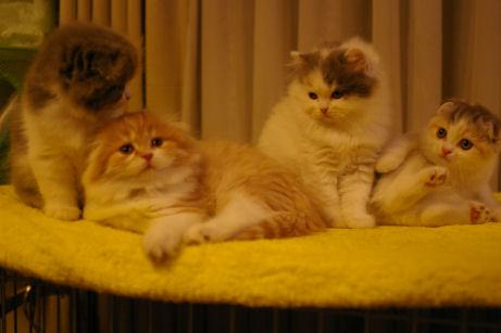 IMGP5449ー猫