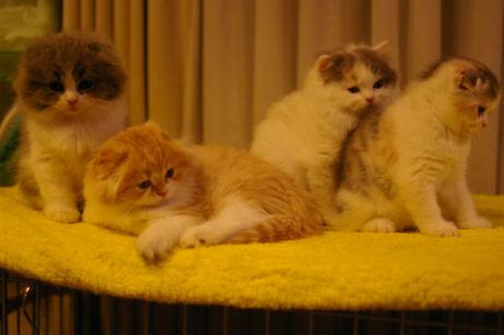 IMGP5451ー猫