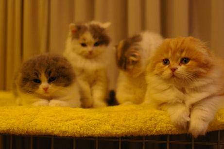 IMGP5455ー猫