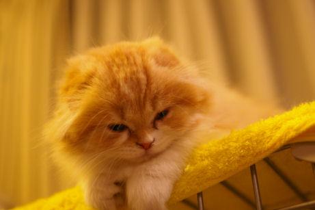 IMGP5462ー猫