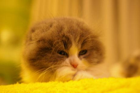 IMGP5463ー猫