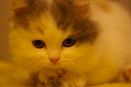 IMGP5475ー猫