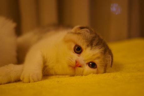 IMGP5482ー猫