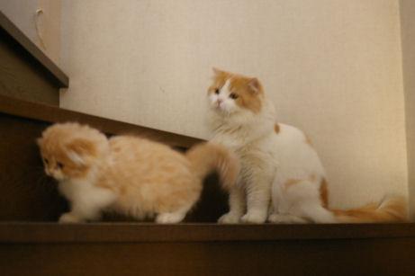IMGP5529ー猫