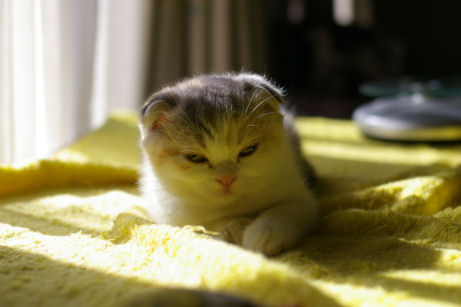 IMGP5686ー猫