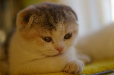 IMGP5723-猫