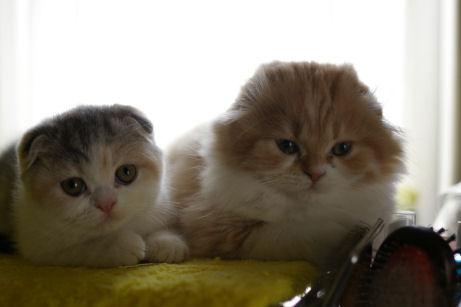 IMGP5778ー猫