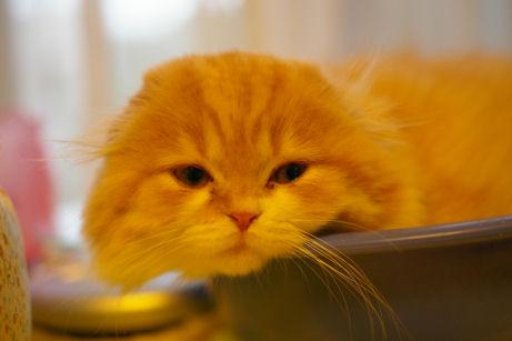 IMGP6473ー猫