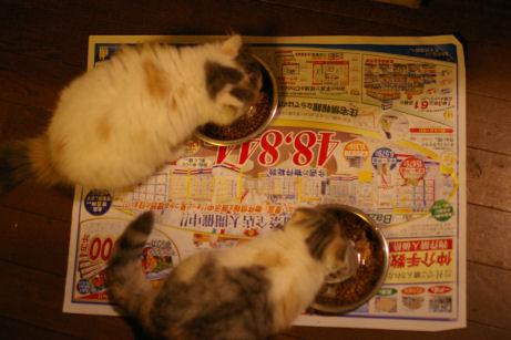 IMGP6556ー猫