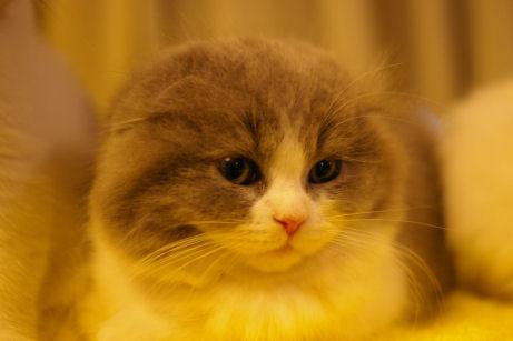IMGP6356ー猫