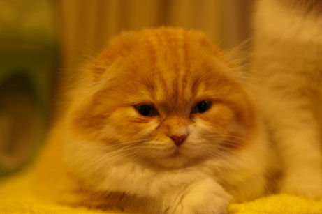 IMGP6354ー猫