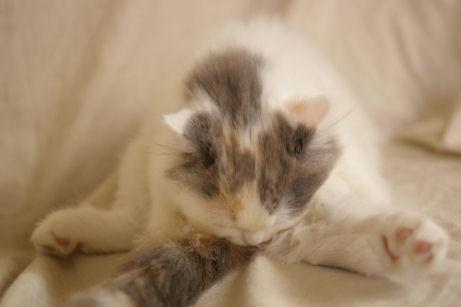 IMGP6651ー猫