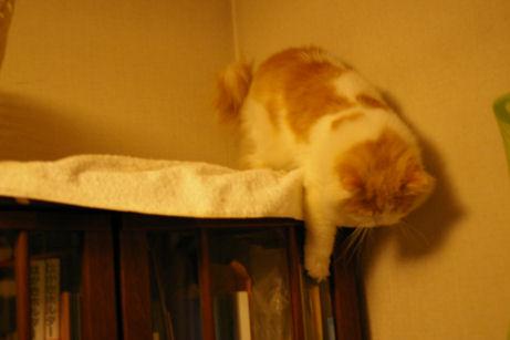 IMGP6759ー猫