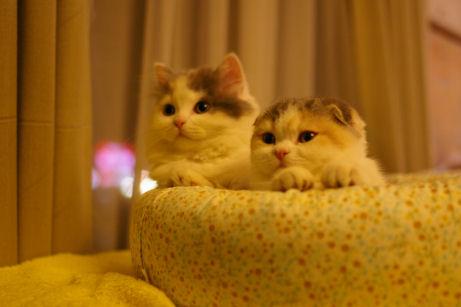 IMGP6751ー猫