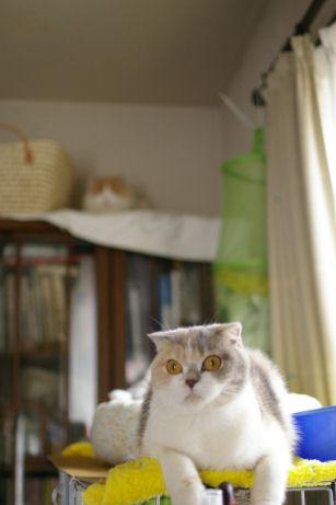 IMGP6782ー猫