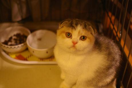 IMGP6810ー猫