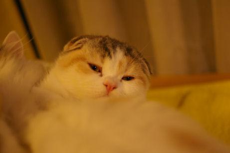 IMGP6840ー猫