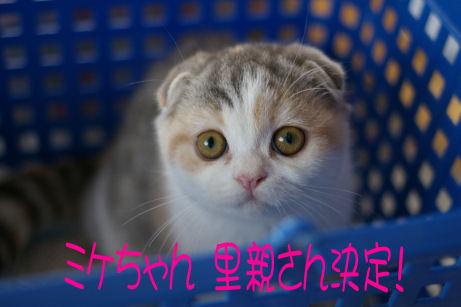IMGP6712ー猫