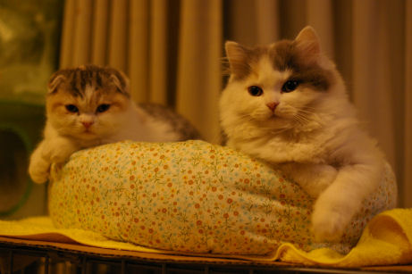 IMGP6867ー猫