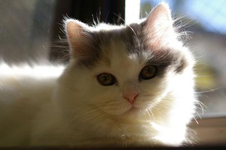 IMGP6893ー猫