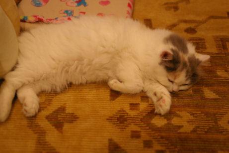IMGP6994ー猫